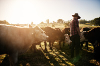 Farmers on property with cattle